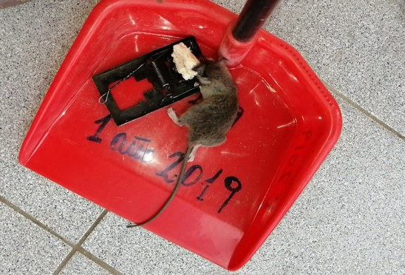 Paro de brazos caídos en Escuela Viluco de Buin por plaga de ratones